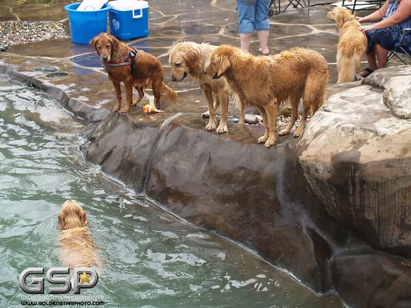 3rd Annual Golden Retriever Meetup Swim Party 163