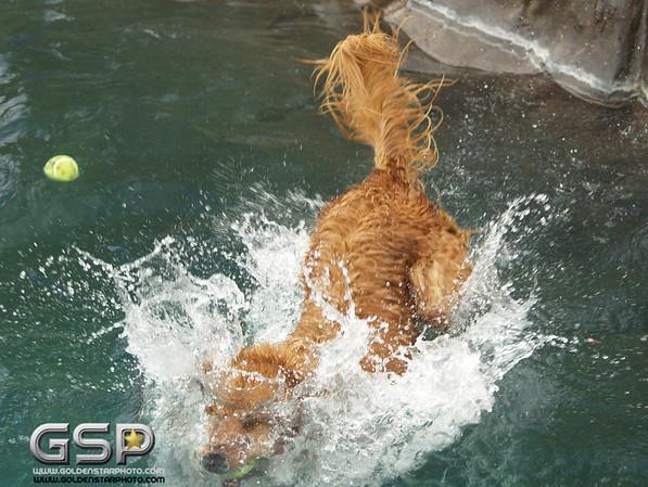 3rd Annual Golden Retriever Meetup Swim Party 019