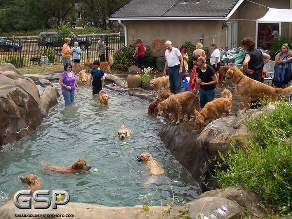 3rd Annual Golden Retriever Meetup Swim Party 149