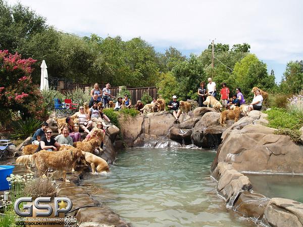 3rd Annual Golden Retriever Meetup Swim Party 132