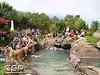 3rd Annual Golden Retriever Meetup Swim Party 131