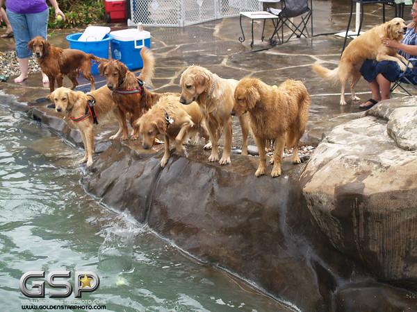 3rd Annual Golden Retriever Meetup Swim Party 161
