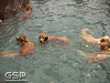 3rd Annual Golden Retriever Meetup Swim Party 144