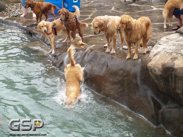 3rd Annual Golden Retriever Meetup Swim Party 162