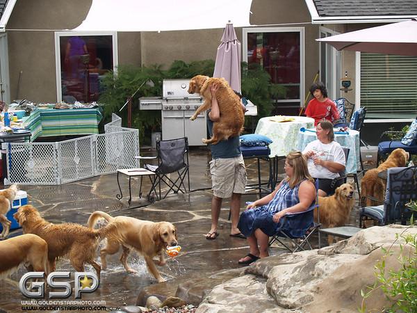 3rd Annual Golden Retriever Meetup Swim Party 159