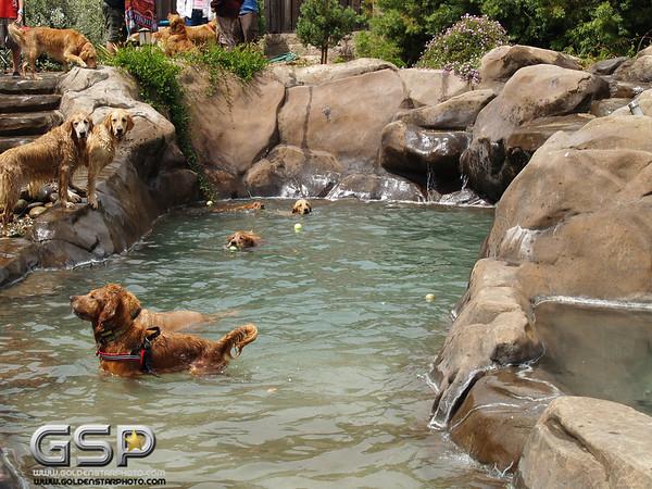 3rd Annual Golden Retriever Meetup Swim Party 138