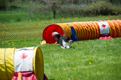 agility photography in Belleville