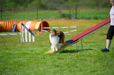 Pet & Agility photography © Lindy Martin