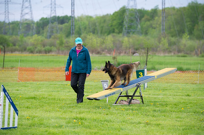 Agility & Pet photography © Lindy Martin