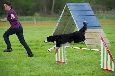 Belleville agility ©Lindy Martin