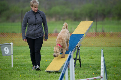 Agility photography ©Lindy Martin
