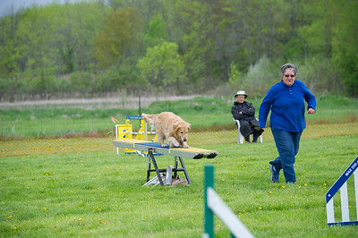 Agility photography © Lindy Martin