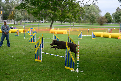 Dog agility photography in Kingston,  © Lindy Martin