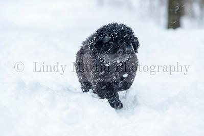 puppy running in the snow
