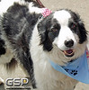 K-9 Cancer Walk Elk Grove 2011 064