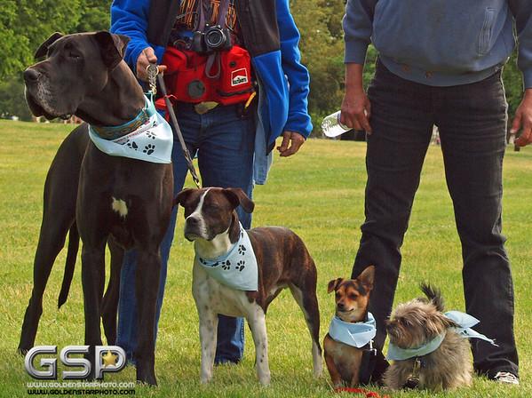 K-9 Cancer Walk Elk Grove 2011 075