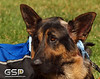 K-9 Cancer Walk Elk Grove 2011 142