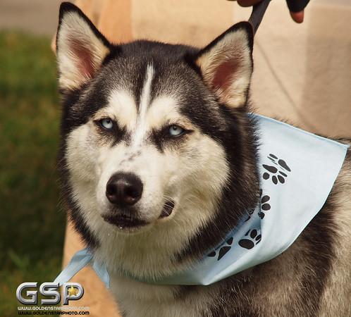K-9 Cancer Walk Elk Grove 2011 140