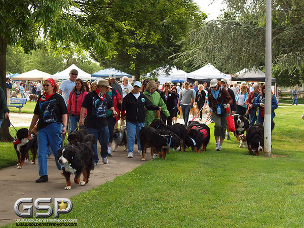 K-9 Cancer Walk Elk Grove 2011 044
