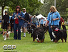 K-9 Cancer Walk Elk Grove 2011 045