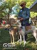 Greyhound Play Day 015
