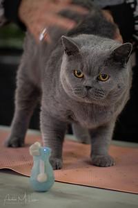 Cats-45