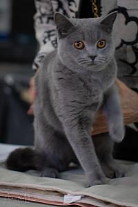 Cats-44