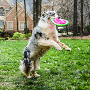 Marlee playing catch with her favorite frisbee