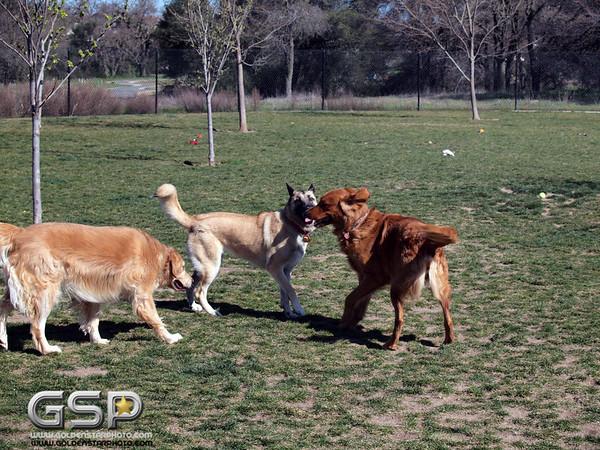 Meetup Walk and Dog Park 052