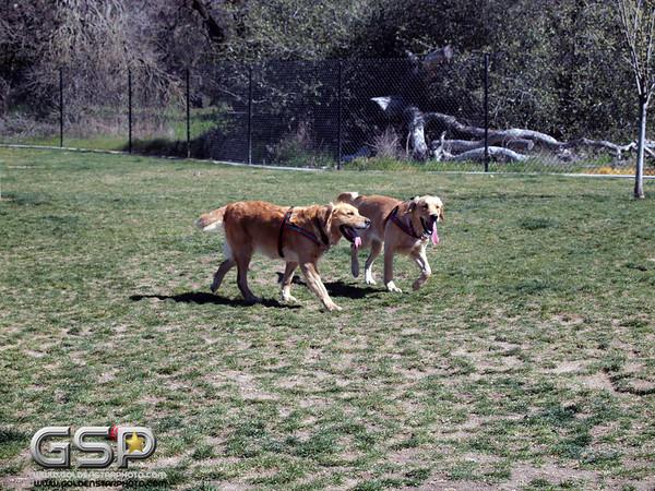 Meetup Walk and Dog Park 111