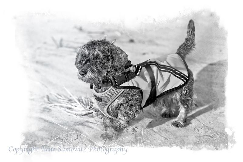 Misty - Marathon Runner