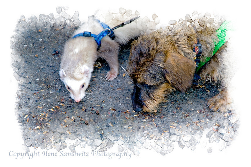 Misty and Otis - Best Friends