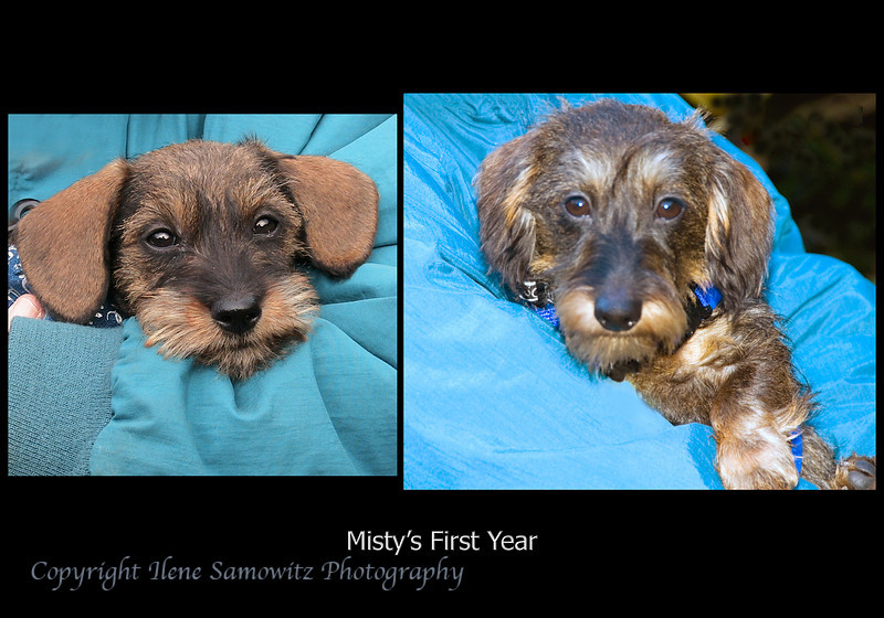 Misty's First Year