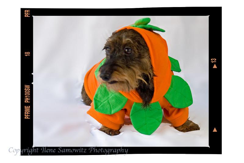 Misty - A cute pumpkin