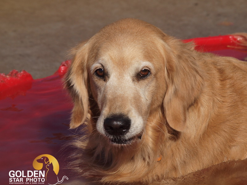 POOCH Dog Park 005