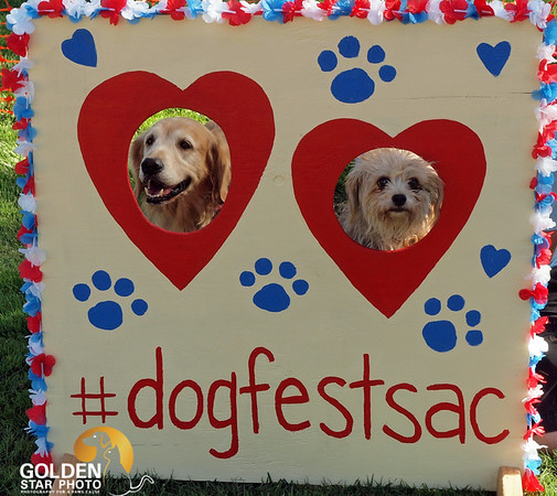 Dog Fest Rock n Roll Sept 2015