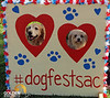 Dog Fest Rock n Roll Sept 2015