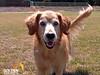Molly at park