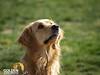 20080421 CBarC Dog Park 016
