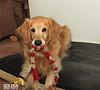 Molly Dec 20 2012