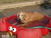 POOCH Dog Park 001a