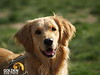 20080421 CBarC Dog Park 018
