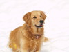 snow dog 087
