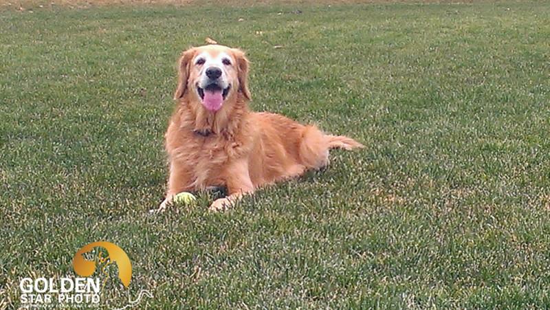 Molly in Grass