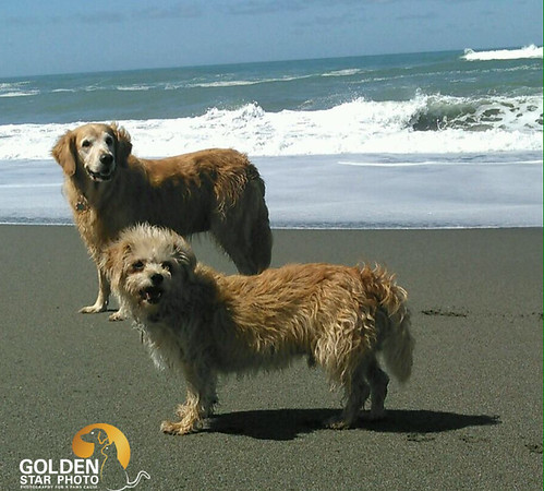 molly and dezzi at beach