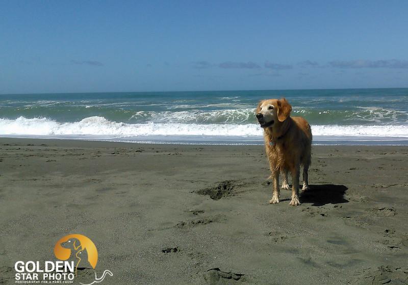 Molly and Dezzi Beach 025