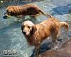 Golden Swim Party 081