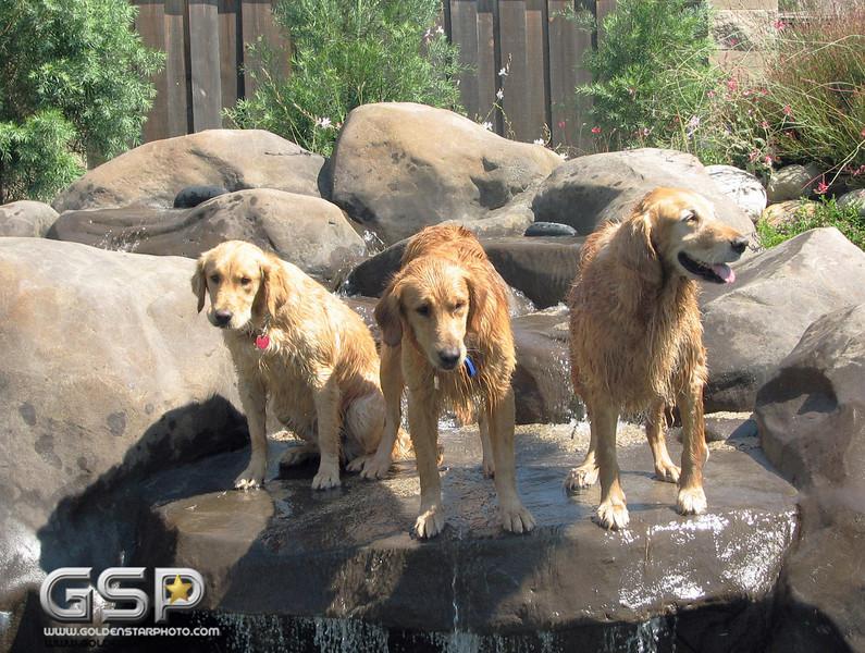 Golden Swim Party 070