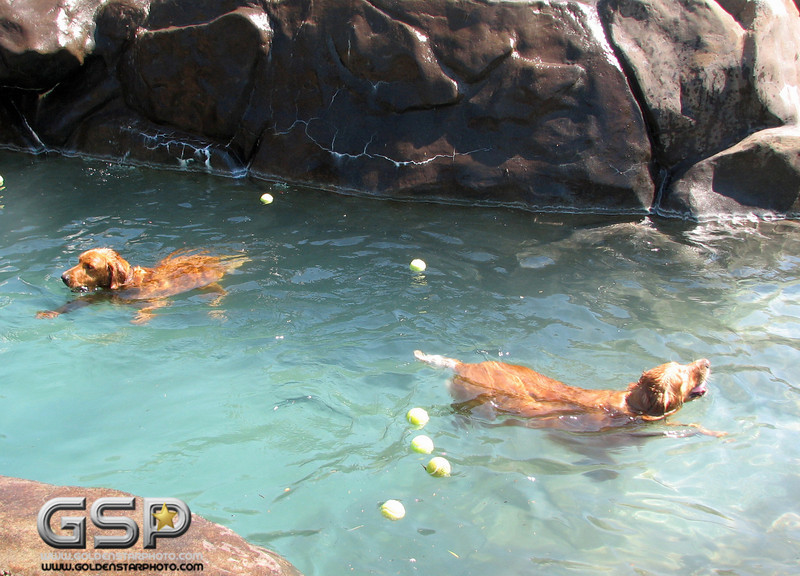 Golden Swim Party 051