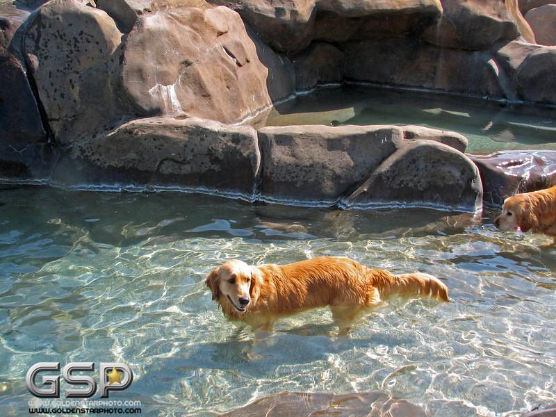 Golden Swim Party 007